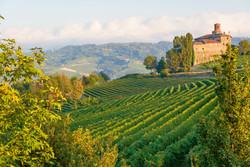 Rebberg im Piemont