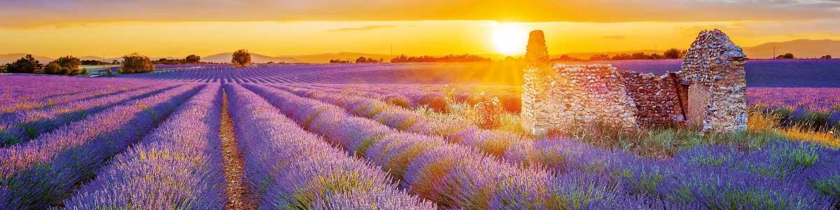 Voyage Marti en Provence